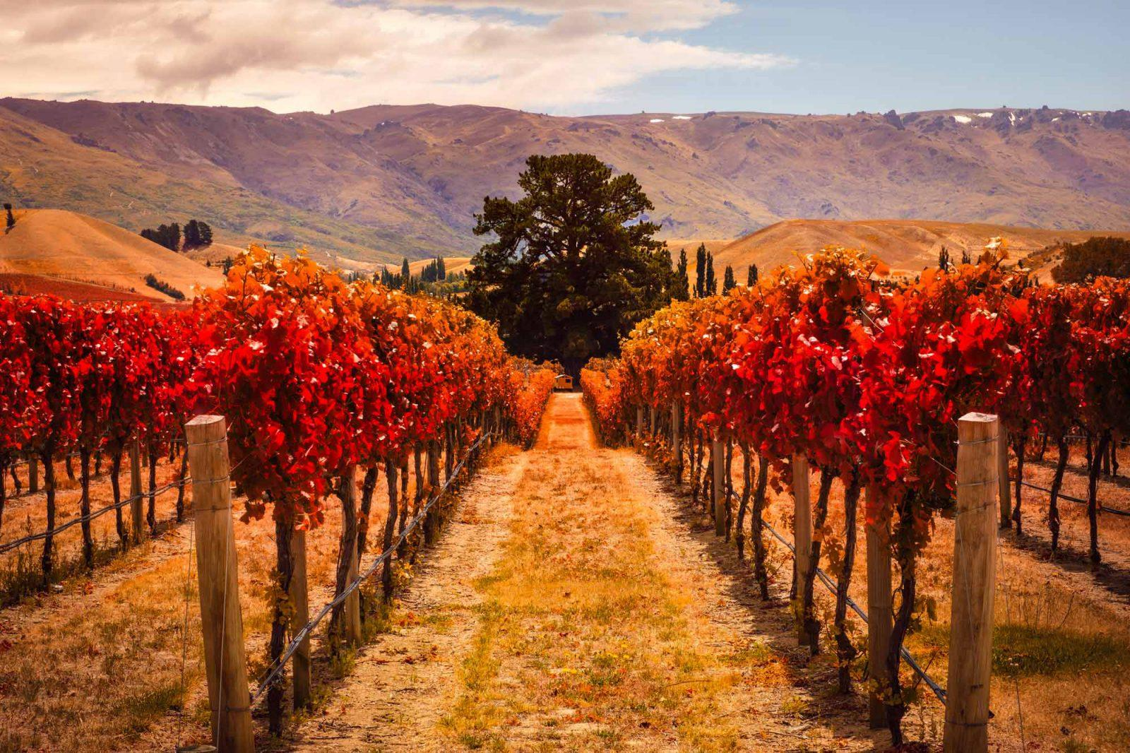 Marlborough-Wine-Country